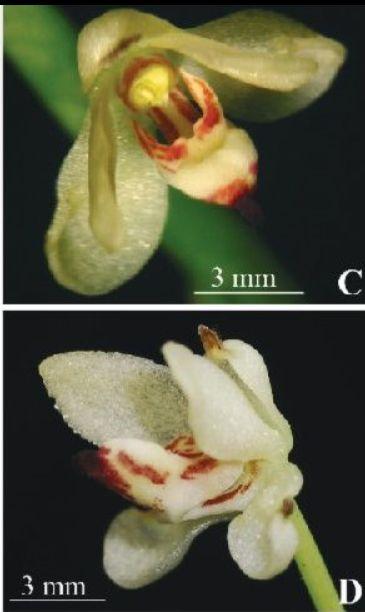 Flower anthesis